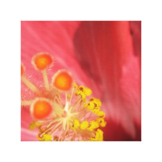 Wrapped Canvas Hibiscus Print