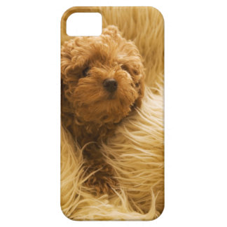 Wrapped up Poodle iPhone 5 Cover