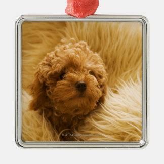 Wrapped up Poodle Silver-Colored Square Decoration