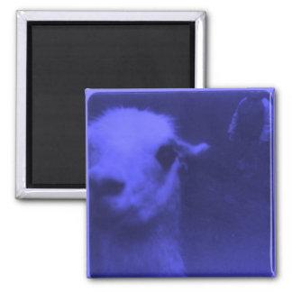 Wrecked 'Um Blue Llama Square Magnet