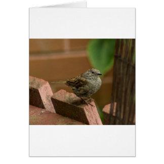 Wren bird card