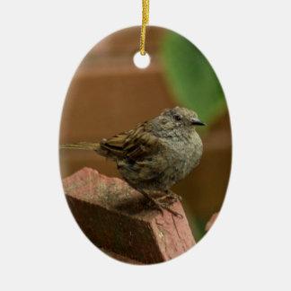 Wren bird ceramic oval decoration