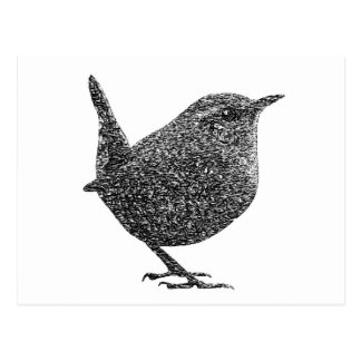 Wren (Black and White) Postcard