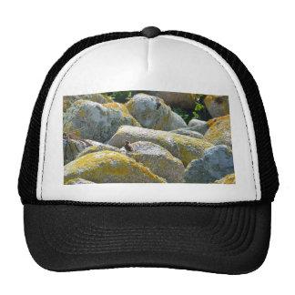 Wren Mesh Hat