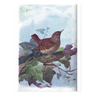 wren postcard