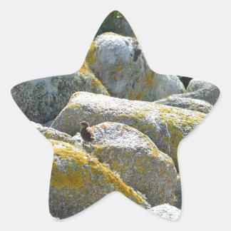 Wren Star Sticker