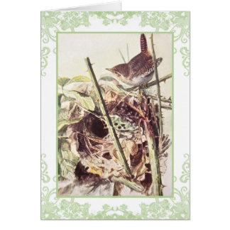 Wren vintage birthday card