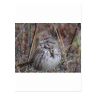 Wrenn South Carolina State Bird Postcard