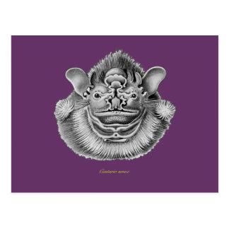 Wrinkle-faced Bat Postcard