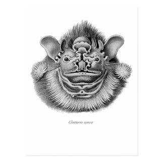 Wrinkle-faced Bat Postcards