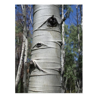 Wrinkled Aspen Tree Postcard