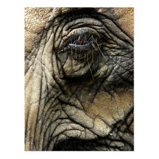 Wrinkled elephant skin and eye postcard