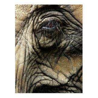 Wrinkled elephant skin and eye postcard