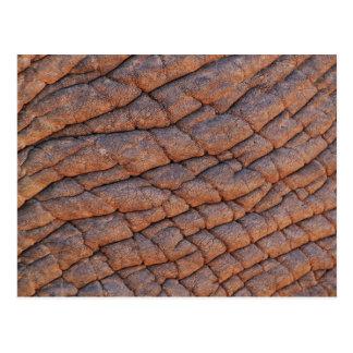 Wrinkly Elephant Skin Texture Template Postcard