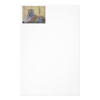 Writing paper tiger stationery paper