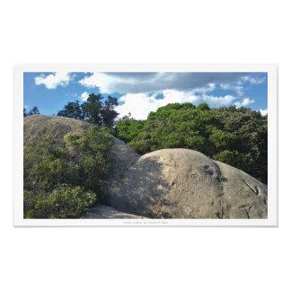 """""""Written in Stone,"""" Nature Decor Photo"""
