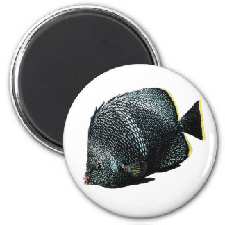 Wrought Iron Butterflyfish and Chaetodon daedelma