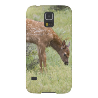 WY, Yellowstone National Park, Elk calf in Galaxy S5 Case
