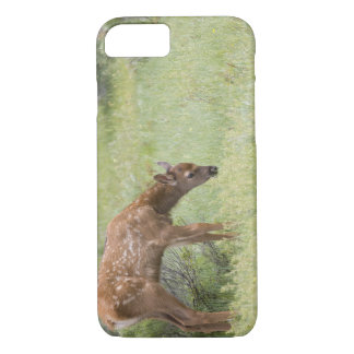 WY, Yellowstone National Park, Elk calf in iPhone 8/7 Case
