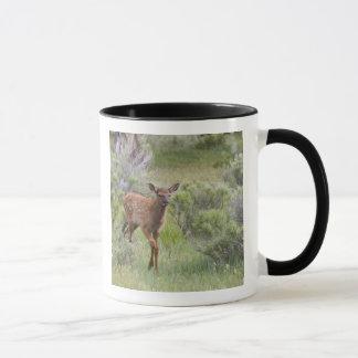 WY, Yellowstone National Park, Elk calf Mug