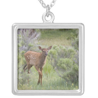 WY, Yellowstone National Park, Elk calf Silver Plated Necklace