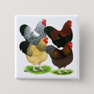 Wyandotte:  Rooster Assortment 15 Cm Square Badge