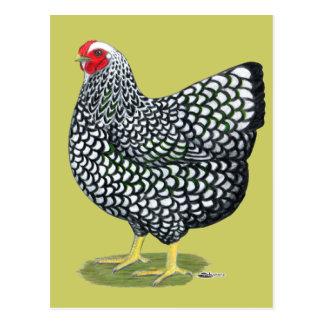 Wyandotte:  Silver-laced Hen Postcard
