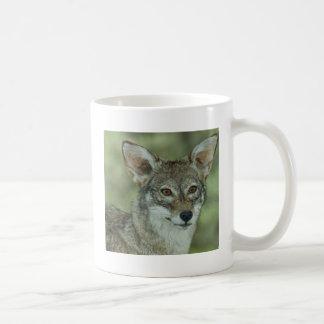 Wyle E Coyote (Beep Beep) Mugs