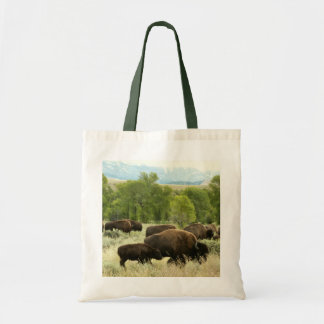 Wyoming Bison Nature Animal Photography