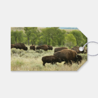 Wyoming Bison Nature Animal Photography Gift Tags