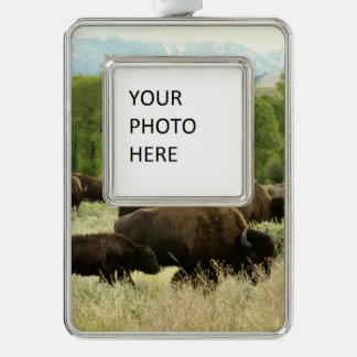 Wyoming Bison Nature Animal Photography Silver Plated Framed Ornament