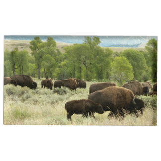 Wyoming Bison Nature Animal Photography Table Card Holder