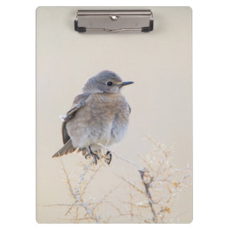 Wyoming, Lincoln County, Female Mountain Clipboard