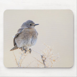 Wyoming, Lincoln County, Female Mountain Mouse Pad