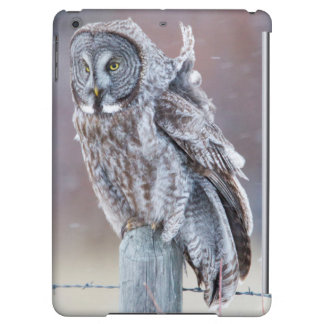 Wyoming, Lincoln County, Great Gray Owl sitting