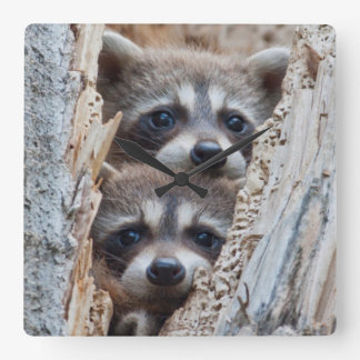 Wyoming, Lincoln County, Raccoon Wall Clocks