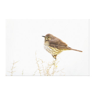Wyoming, Lincoln County, Sage Thrasher roosting Canvas Print