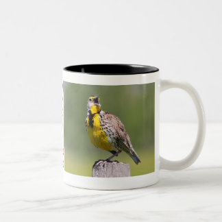 Wyoming Mug-Meadowlark Two-Tone Coffee Mug