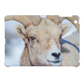 Wyoming, National Elk Refuge, Bighorn Sheep Ram iPad Mini Cover