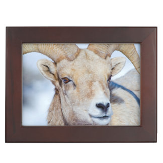 Wyoming, National Elk Refuge, Bighorn Sheep Ram Keepsake Box