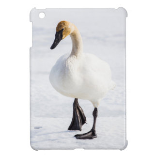 Wyoming, National Elk Refuge, Trumpeter Swan 1 Case For The iPad Mini