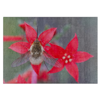 Wyoming, Sublette County, Bee Fly with proboscis Cutting Board
