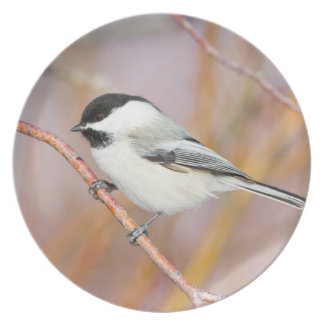 Wyoming, Sublette County, Black-capped Chickadee Plate