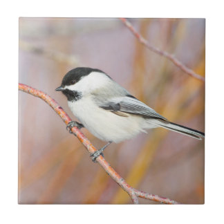 Wyoming, Sublette County, Black-capped Chickadee Tile
