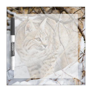 Wyoming, Sublette County, Bobcat in winter Dry Erase Board