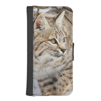 Wyoming, Sublette County, Bobcat in winter iPhone SE/5/5s Wallet Case