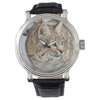 Wyoming, Sublette County, Bobcat in winter Wrist Watches
