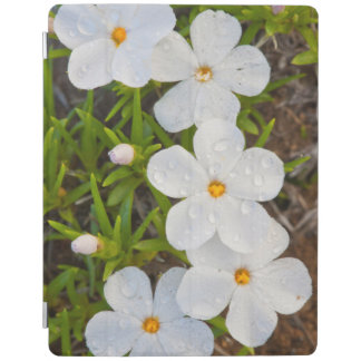 Wyoming, Sublette County, Close-up of Phlox iPad Cover