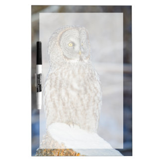 Wyoming, Sublette County, Great Gray Owl 1 Dry Erase Board