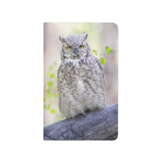 Wyoming, Sublette County, Great Horned Owl 2 Journal